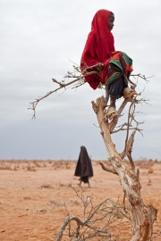 A Somali refugee girl sits perched on a tree in Ifo camp, Dadaab in Kenya  Photo by Brendan Bannon (SOURCE: boston.com)